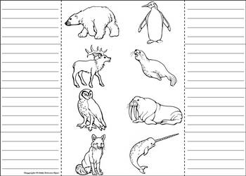 Arctic Animals Activity: Interactive Notebook Foldable/ Coloring Book