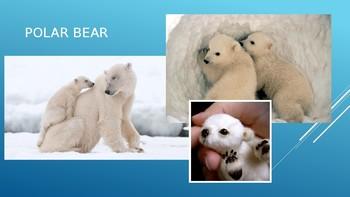 Arctic Animals Adaptations