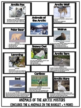 Arctic Animal Adaptations: Booklet, Posters and Reading Comprehension Activities