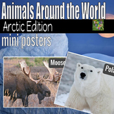 Arctic Animals- Animals Around the World Mini Posters