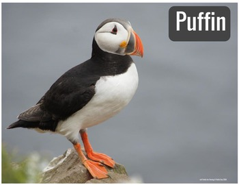 Arctic Animals- Animals Around the World Mini Posters