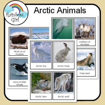 Arctic Animals Cards