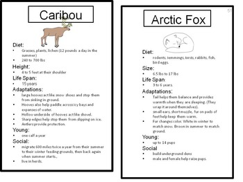 Arctic Animals Fact Cards