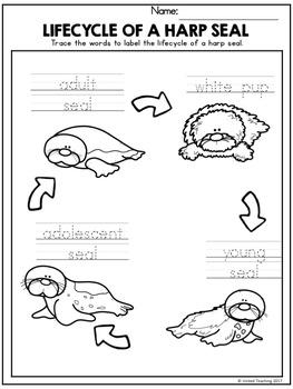 Arctic Animals Handwriting Lessons (Manuscript Edition)