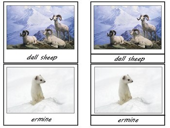 Arctic Animals 3 Part Cards & Field Guide