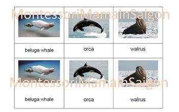 Arctic Animals Montessori Three Part Vocabulary Cards