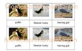Arctic Animals Montessori Three Part Cards