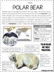 Main Idea Non-Fiction Articles: Arctic Animals