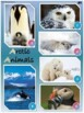 Arctic Animals Nonfiction First Grade Reading Comprehension