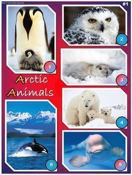 Arctic Animals Nonfiction Reading Comprehension Passages