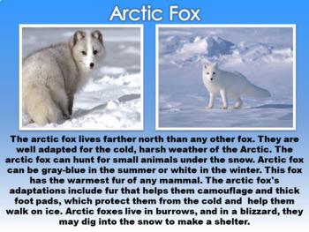 Arctic Animals PowerPoint
