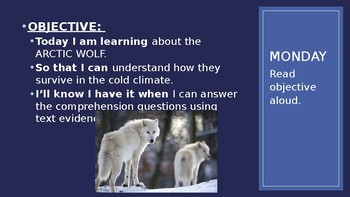Arctic Animals Powerpoint Lesson