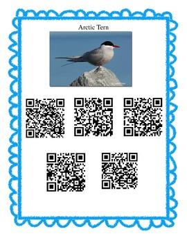 Arctic Animals QR Codes