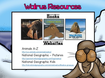 Arctic Animals Research for Kinder