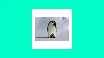 Arctic Animals Review