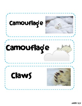 Arctic Animals Vocabulary Word Wall Cards