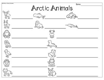Arctic Animals Write the Room