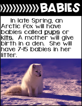 Arctic Fox-Informational Text Reading, Writing, & Research
