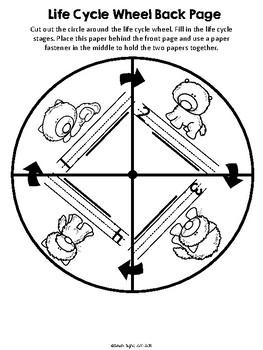 Arctic Fox Life Cycle Wheel and Poster Set
