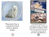 Arctic Fox Non- Fiction Easy Reader