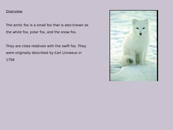 Arctic Fox Power Point - 7 slides with pictures