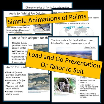 Arctic Fox - PowerPoint