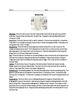 Arctic Fox - review article questions information facts vocabulary word search