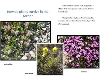 Arctic Habitat Power Point
