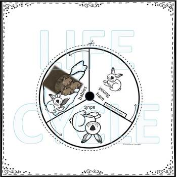 Arctic Hare (Life Cycle Spinner)