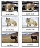 Arctic Montessori 3-part cards--Safari Arctic Toob