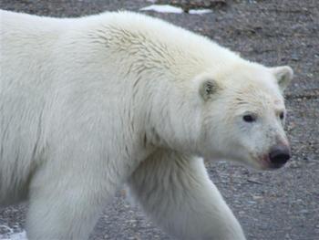 Arctic National Wildlife Refuge Documented Persuasion Paper Assignment