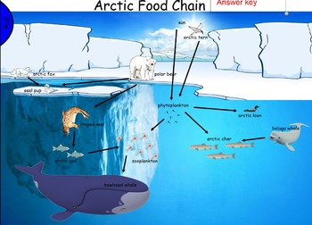 Arctic Ocean Food Chain for Smartboard