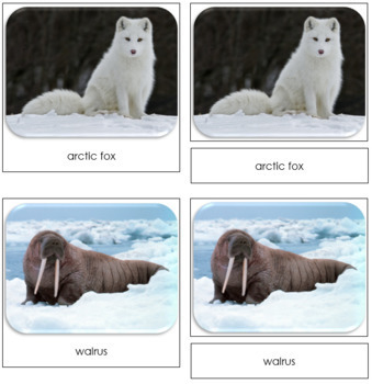 Arctic Safari Toob Cards - Montessori