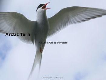 Arctic Tern - Bird - Power Point - Information Pictures Facts Endangered
