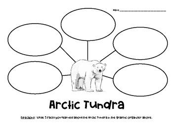 Arctic Tundra Nonfiction Facts Graphic Organizer
