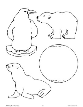 Arctic and Antarctic Activity Patterns