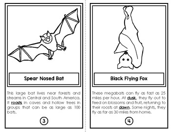 Are All Bats Alike? (Nonfiction Text & Comprehension Questions)