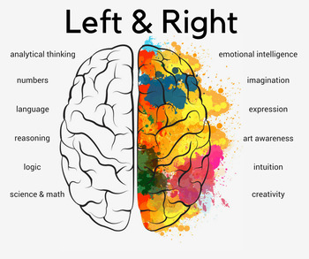 Are You Left or Right Brained?