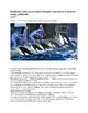 Argumentative Text Set: SeaWorld