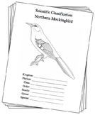 Arkansas State Bird Notebooking Set (Northern Mockingbird)