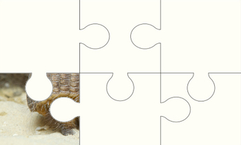 Armadillo Digital Puzzle VIPKID