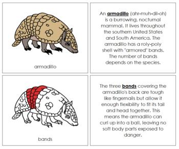 Armadillo Nomenclature Book (Red)