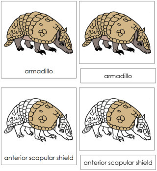 Armadillo Nomenclature Cards