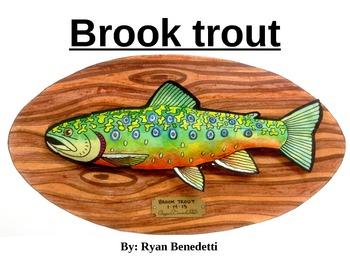 Art: Brook trout