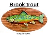 Art: Brook trout