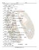 Art Forms Statements Missing Words Spanish Worksheet