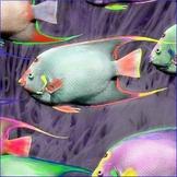 Ocean Animals Activity - Zoo Animals Actvity
