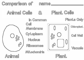 Art Science ... Animal and Plant Cells (5 pages) Scientific Diagram, Vocab STEAM