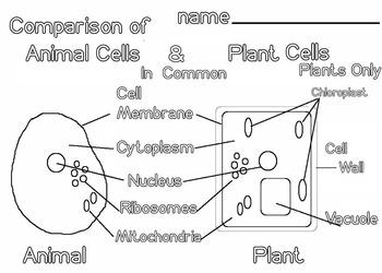 Animal and Plant Cells (5 pages) Scientific Diagram, Vocab STEAM, Art Science