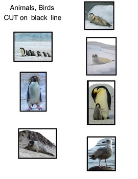 Art Science ... Antarctic Animals (Draw Write Color) 8 pages Seal, Penguin,+